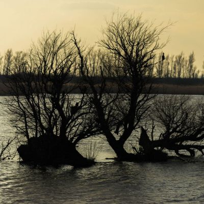<strong>Boomstronken in het water van de Oostvaardersplassen</strong>