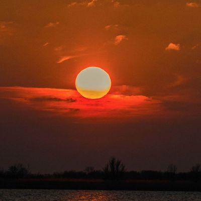 <strong>De zon boven de Oostvaardersplassen</strong>
