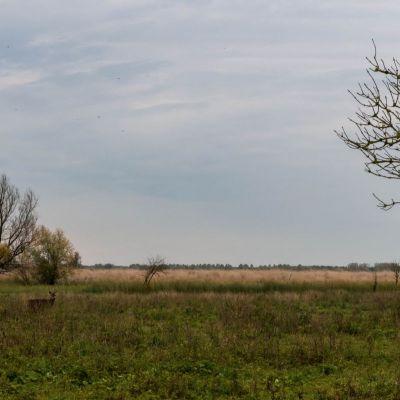 <strong>In het landschap van de Oostvaardersplassen een klein hertje</strong>