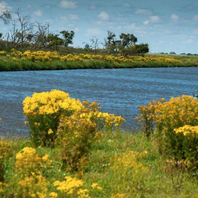 <strong>Landschap met mooie gele bloemen in de Oostvaardersplassen</strong>