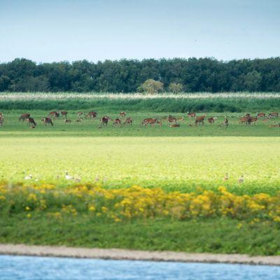 <strong>Landschap van Oostvaardersplassen</strong>