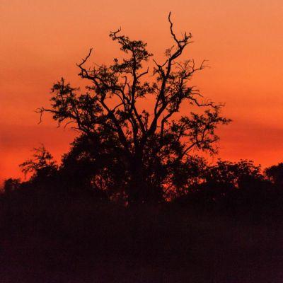 <strong>Het landschap bij avondlicht in het  South Luangwa National Park Zambia</strong>