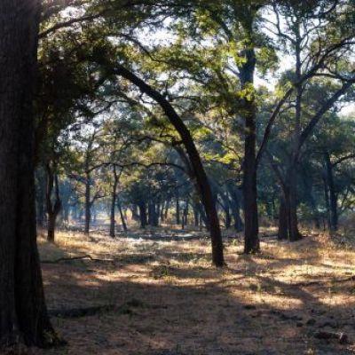 <strong>Pamorama van het landschap in het South Luangwa National Park Zambia</strong>