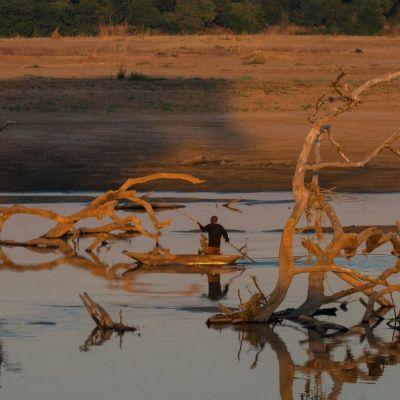 <strong>Een visser tussen de boomstronken van het South Luangwa National Park Zambia</strong>
