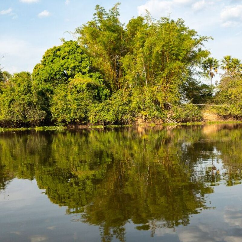 <strong>Lanschap  (Pantanal Mato Grosso Brazilië)</strong>