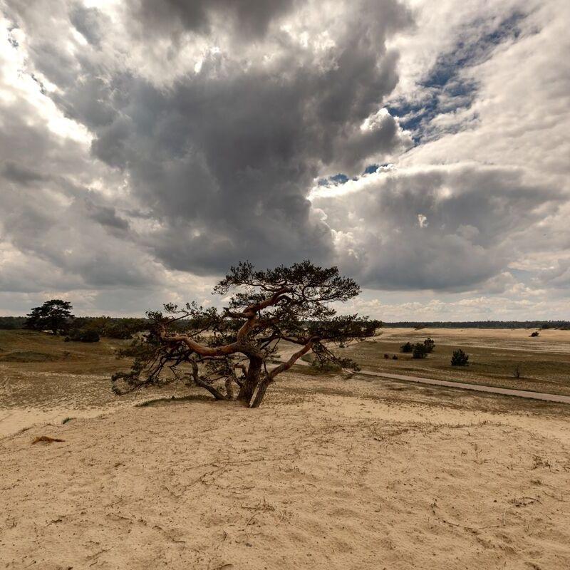 <strong>Grove Den (Beekhuizerzand Harderwijk)</strong>