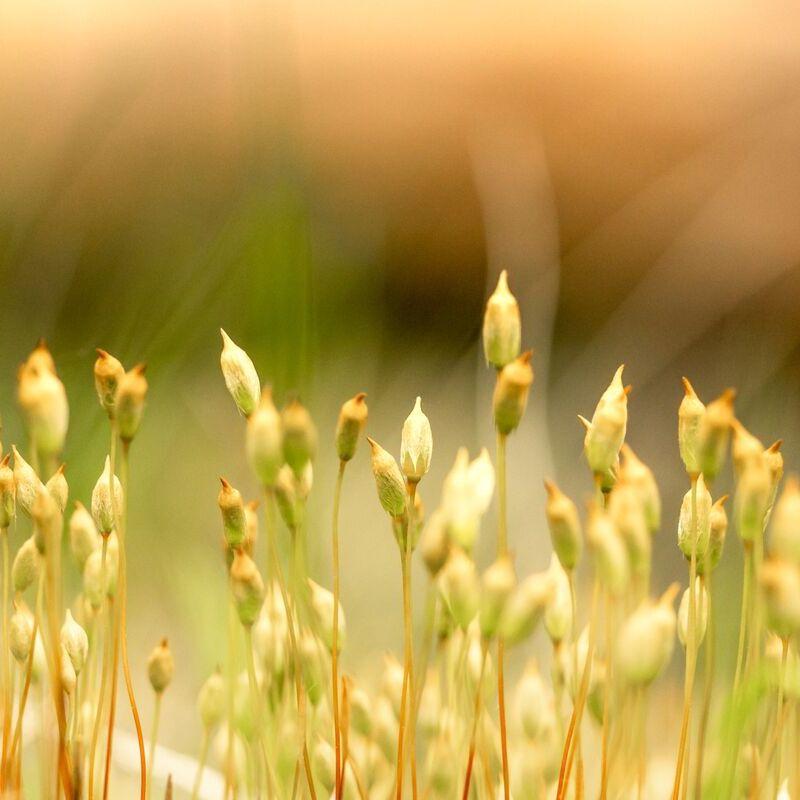 <strong>Gras (Leuvenumse Bos Harderwijk)</strong>