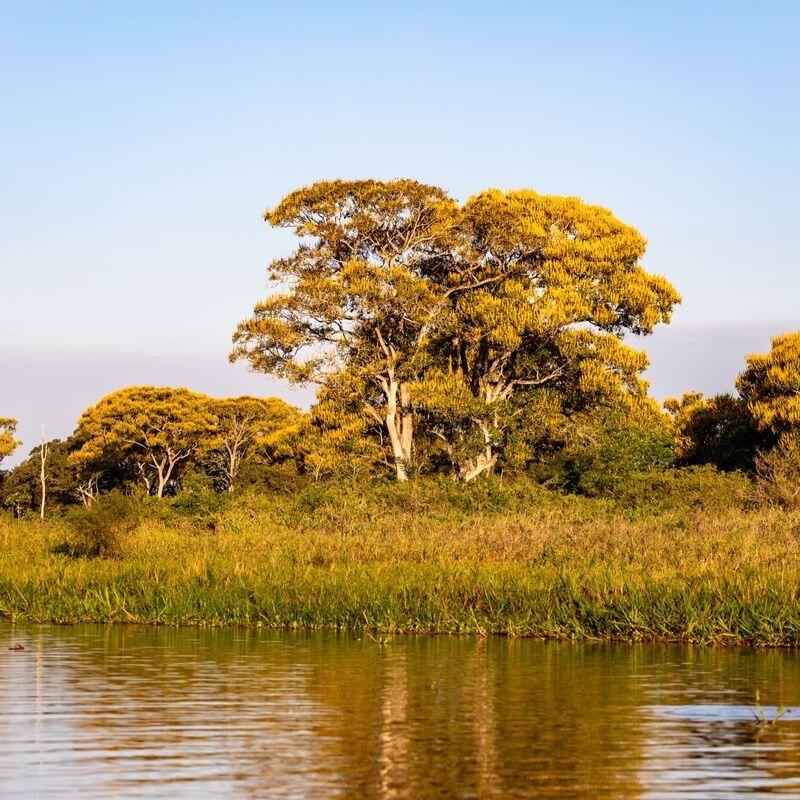 <strong>Landschap Grove Den  (Pantanal Mato Grosso Brazilië)</strong>