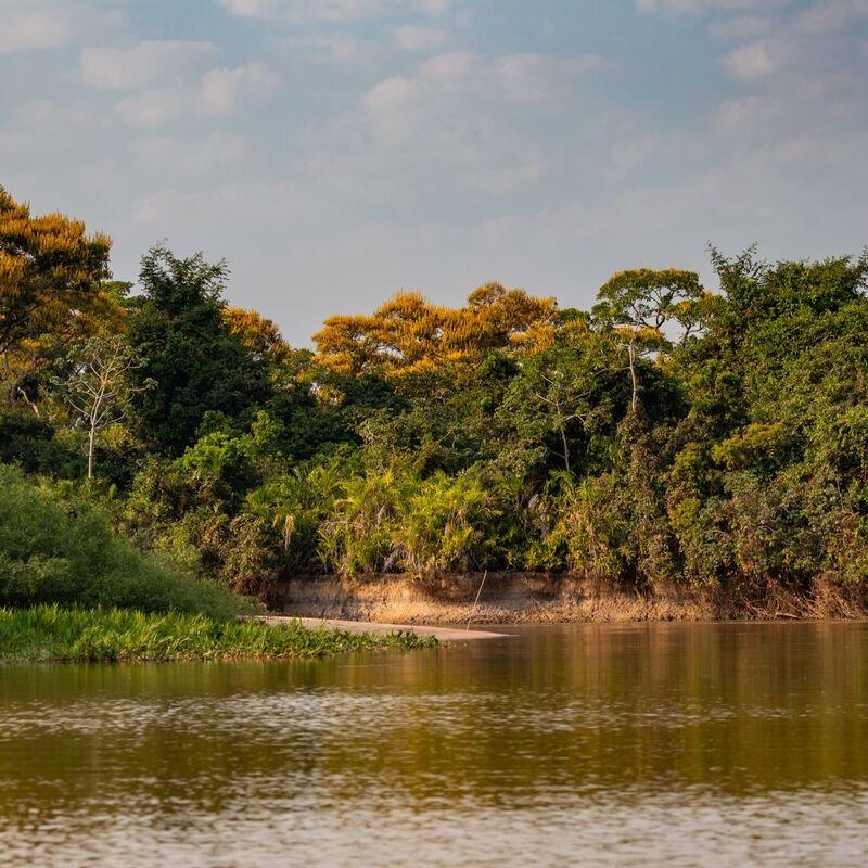 <strong>Landschap  (Pantanal Mato Grosso Brazilië)</strong>