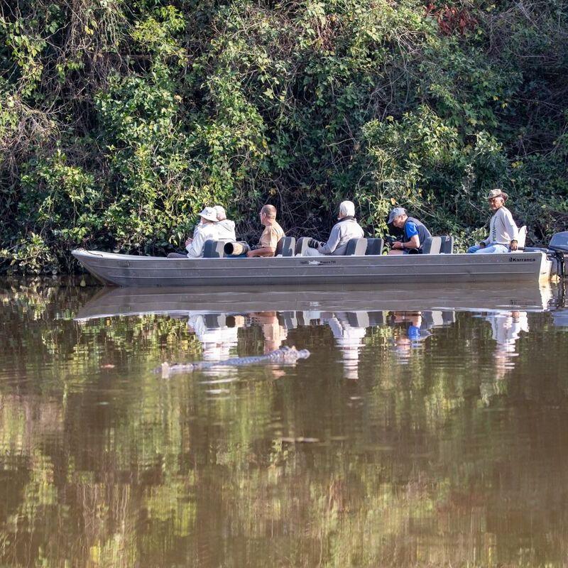 <strong>Varen  (Pantanal Mato Grosso Brazilië)</strong>