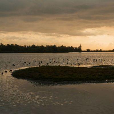 <strong>Het avondlicht met lepelaars in de Oostvaardersplassen</strong>