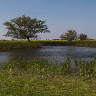 <strong>Panorama van het water in het  landschap van de Oostvaardersplassen</strong>